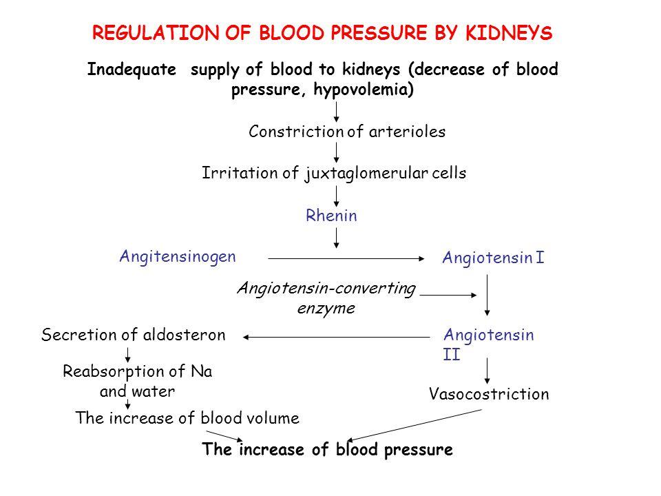REGULATION OF BLOOD PRESSURE BY KIDNEYS Inadequate supply of blood to kidneys (decrease of blood pressure, hypovolemia) Constriction of arterioles Irr