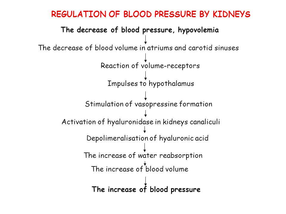REGULATION OF BLOOD PRESSURE BY KIDNEYS The decrease of blood pressure, hypovolemia The decrease of blood volume in atriums and carotid sinuses Reacti