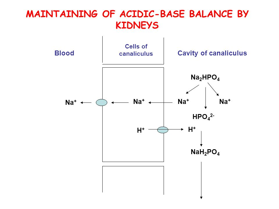 Cells of canaliculus BloodCavity of canaliculus Na 2 HPO 4 Na + HPO 4 2- Na + NaH 2 PO 4 Na + H+H+ H+H+ MAINTAINING OF ACIDIC-BASE BALANCE BY KIDNEYS