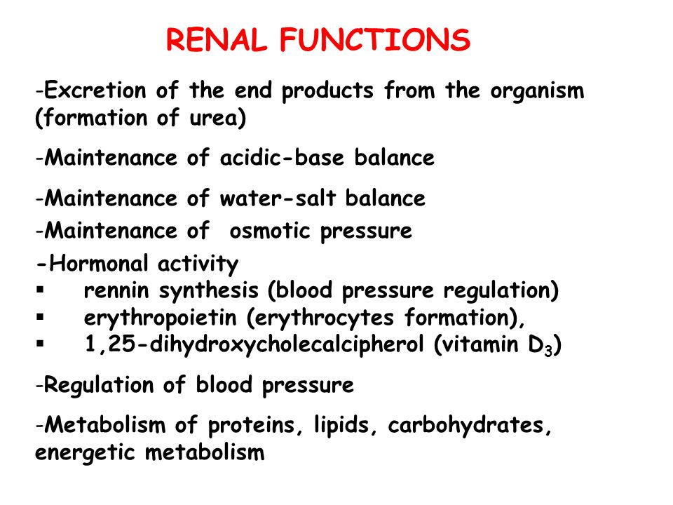 RENAL FUNCTIONS -Excretion of the end products from the organism (formation of urea) -Maintenance of acidic-base balance -Maintenance of water-salt ba