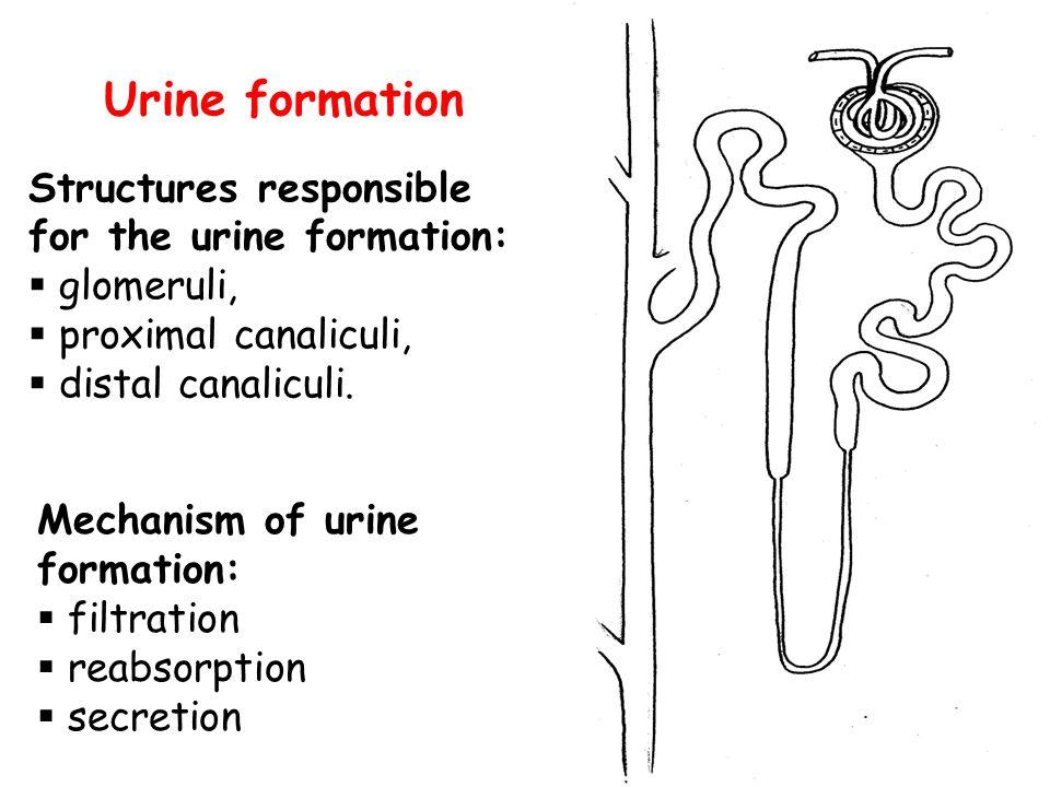Mechanisms of elimination:  filtration  reabsorption  excretion
