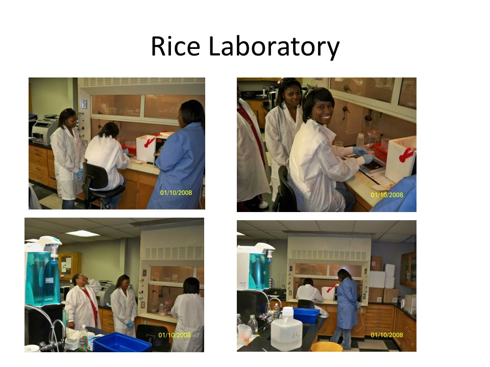 Rice Laboratory