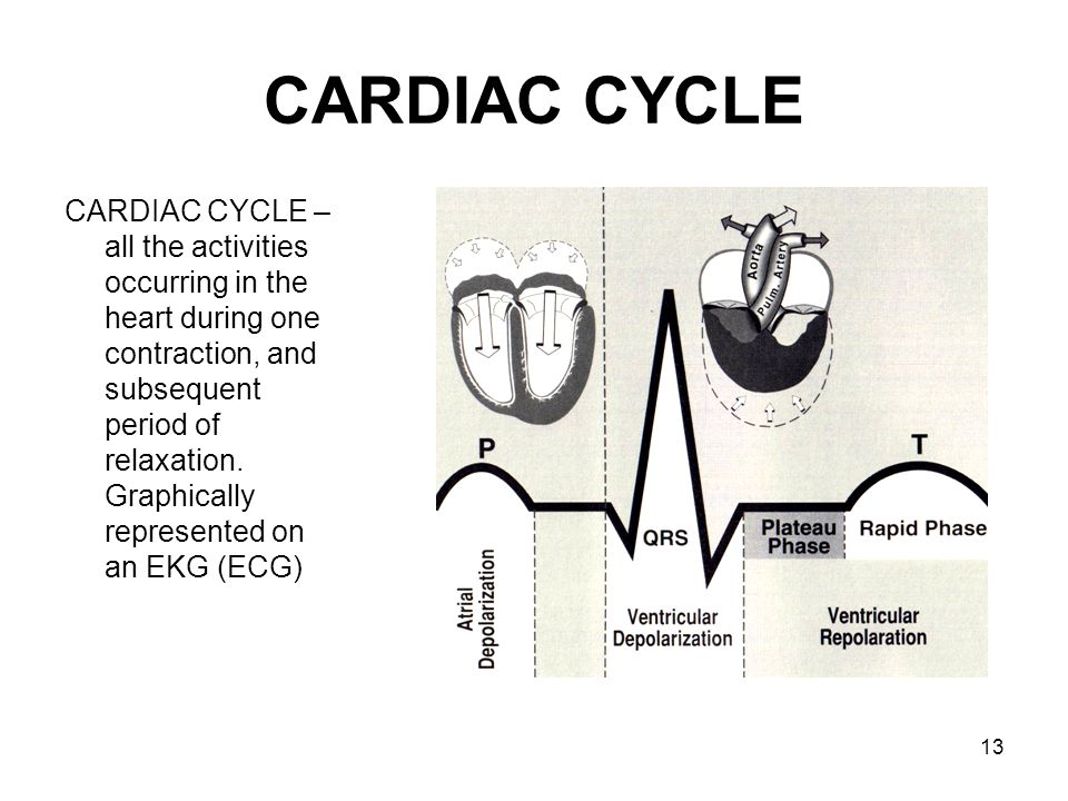 13 CARDIAC CYCLE CARDIAC CYCLE – all the activities occurring in the heart during one contraction, and subsequent period of relaxation. Graphically re