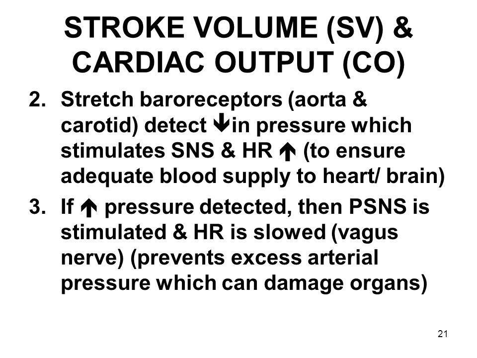 21 STROKE VOLUME (SV) & CARDIAC OUTPUT (CO) 2.Stretch baroreceptors (aorta & carotid) detect  in pressure which stimulates SNS & HR  (to ensure adeq