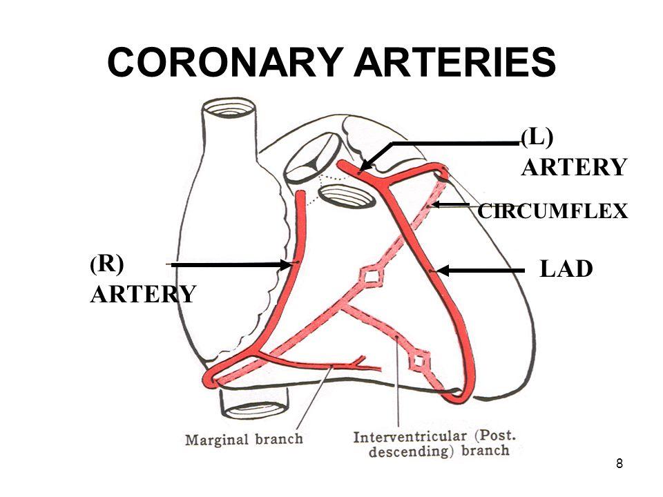 8 CORONARY ARTERIES ( R) ARTERY ( L) ARTERY LAD CIRCUMFLEX