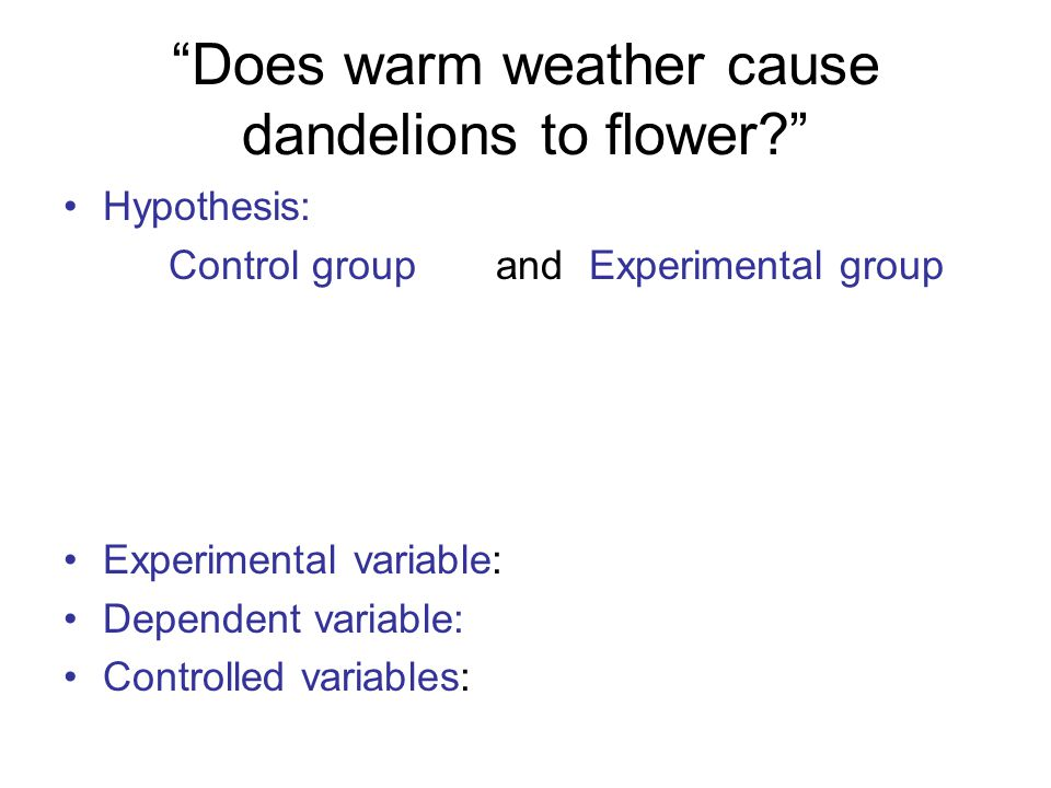 Does warm weather cause dandelions to flower Hypothesis: Control group and Experimental group Experimental variable: Dependent variable: Controlled variables:
