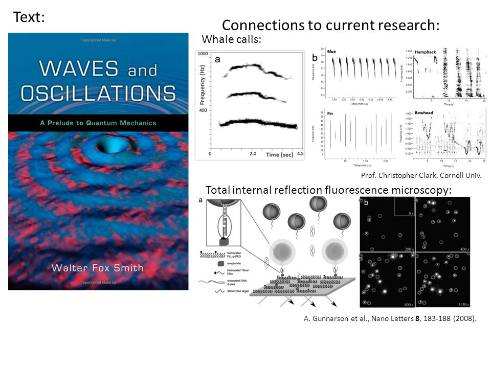 Text: Connections to current research: Whale calls: Total internal reflection fluorescence microscopy: Prof.