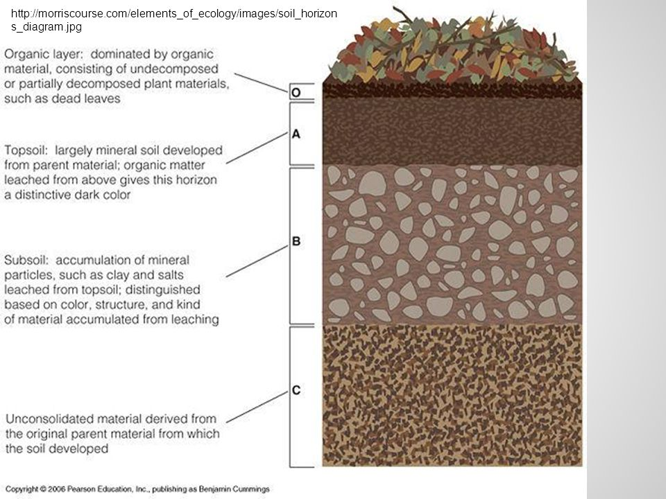 http://morriscourse.com/elements_of_ecology/images/soil_horizon s_diagram.jpg