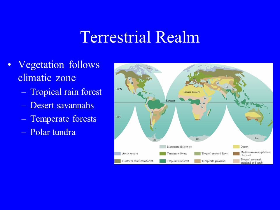 The Terrestrial Realm Latitudinal Zones and Vegetation Rain forests Deserts Savannah Grasslands Temperate Forest Conifer or Evergreen Forest Tundra