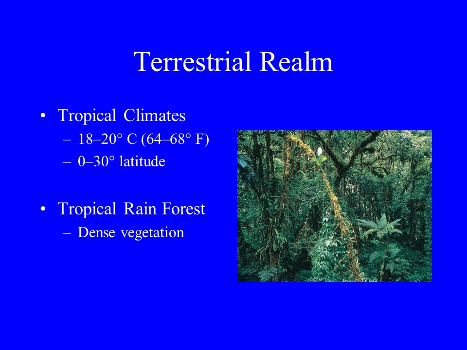 Terrestrial Realm Vegetation follows climatic zone –Tropical rain forest –Desert savannahs –Temperate forests –Polar tundra