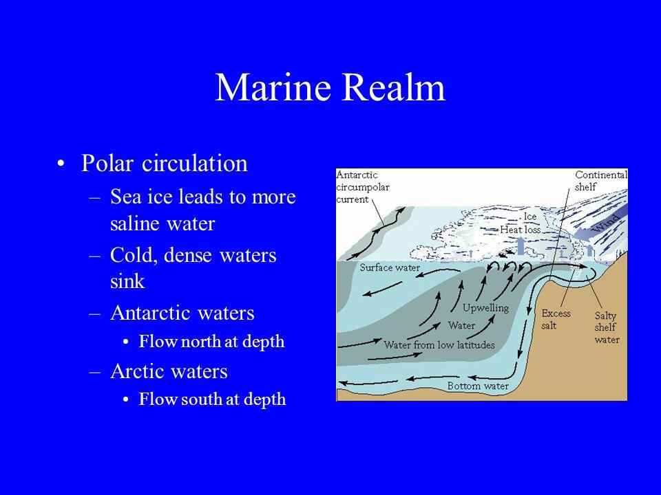 Marine Realm Circumpolar current –Circles Antarctica –Very cold