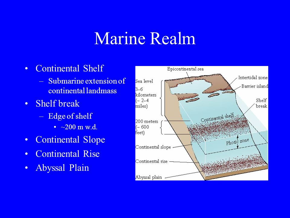 Marine Realm Ocean circulation –Waves Surface waves –Wind driven –Break when seafloor interacts at shallow depths –Tides Cause major movement of water in oceans Due to rotation of solid Earth beneath bulges of water produced by gravitational attraction of the moon