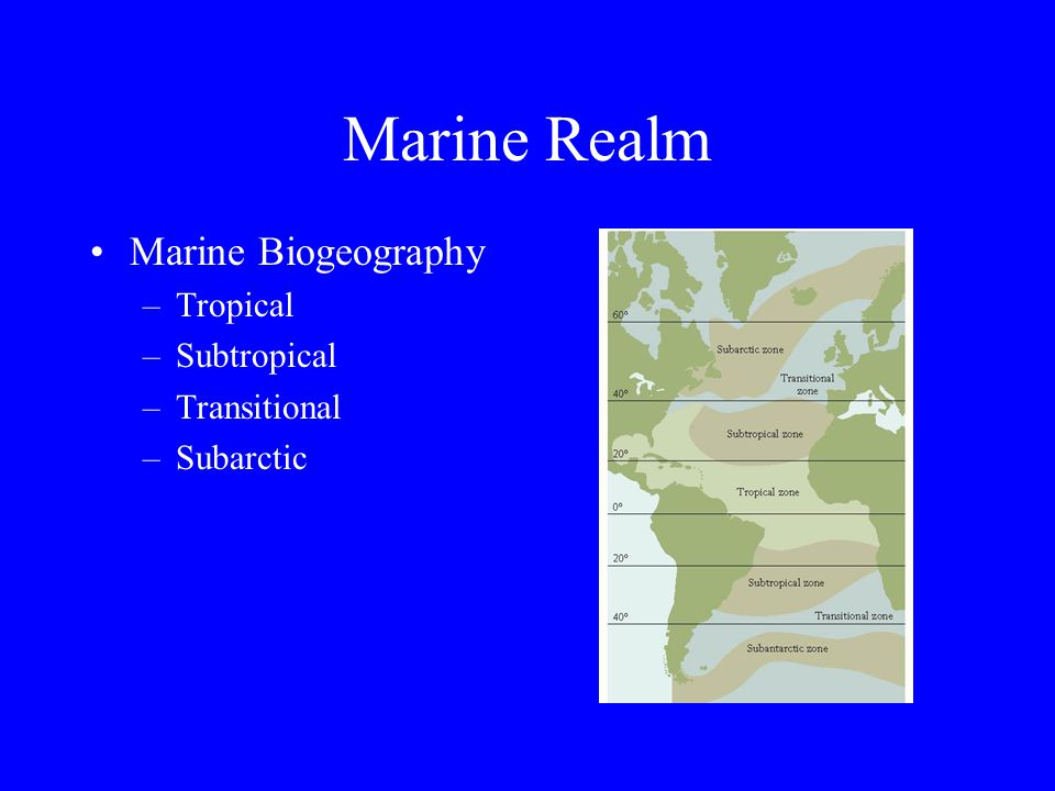 Marine Realm Photic Zone –Region of ocean where enough light penetrates to permit photosynthesis Pelagic life –Plankton Phytoplankton Zooplankton –Nekton Benthic life –Suspension feeders –Deposit feeders