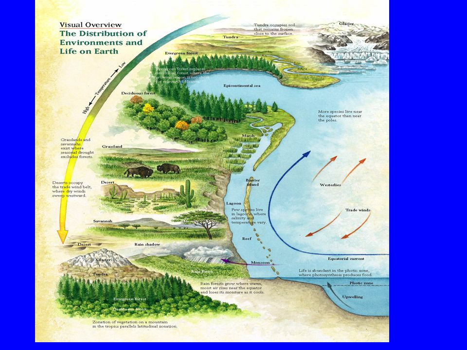 Deep Water Circulation
