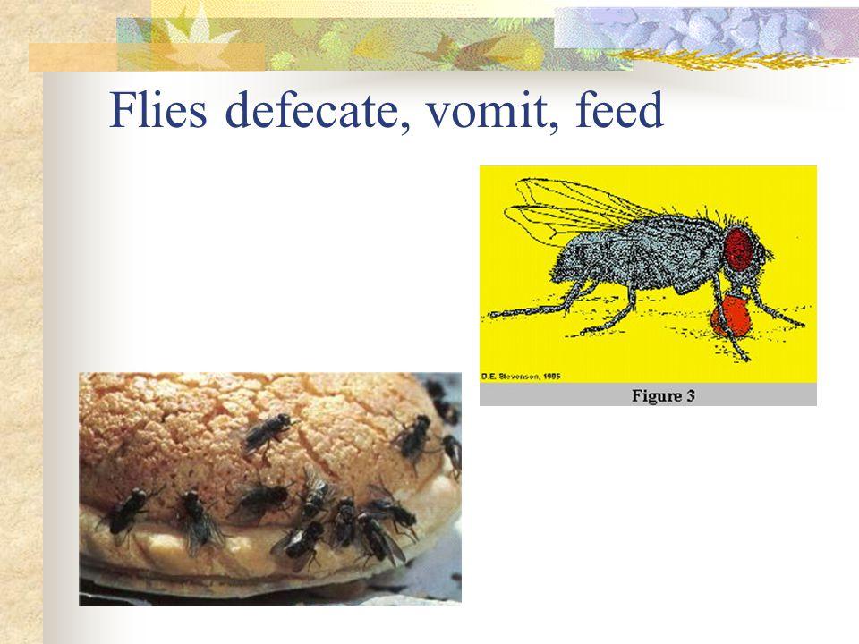 Flies defecate, vomit, feed