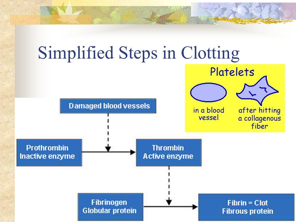 Simplified Steps in Clotting