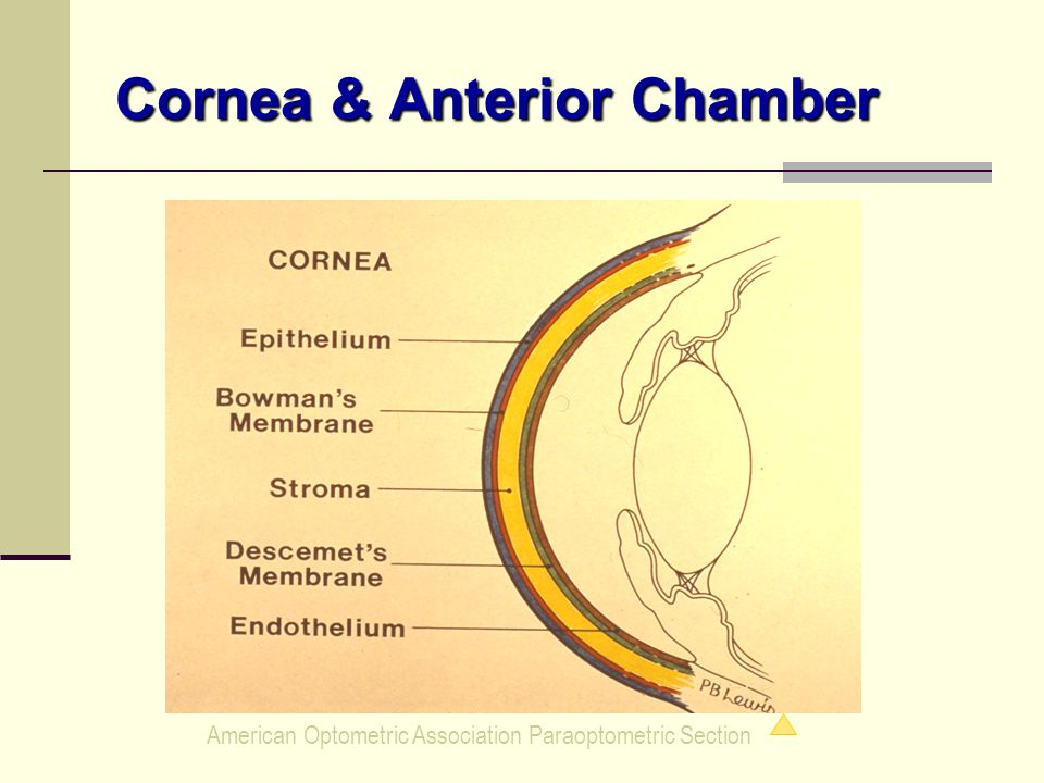 American Optometric Association Paraoptometric Section Cornea & Anterior Chamber