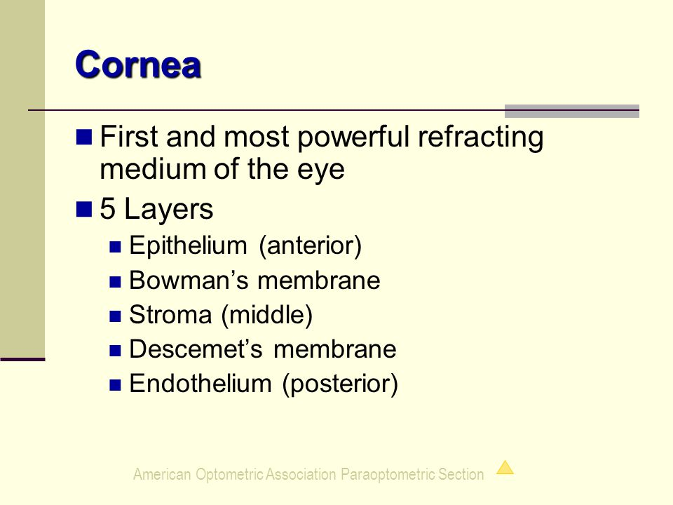 American Optometric Association Paraoptometric Section Cornea First and most powerful refracting medium of the eye 5 Layers Epithelium (anterior) Bowman's membrane Stroma (middle) Descemet's membrane Endothelium (posterior)