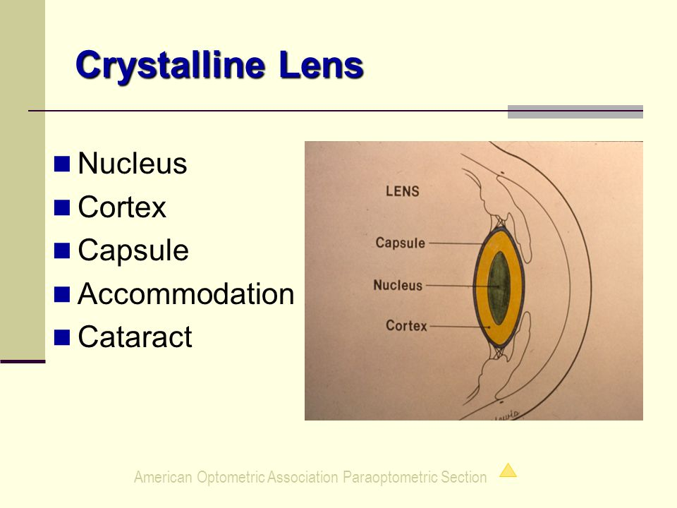 American Optometric Association Paraoptometric Section Crystalline Lens Nucleus Cortex Capsule Accommodation Cataract
