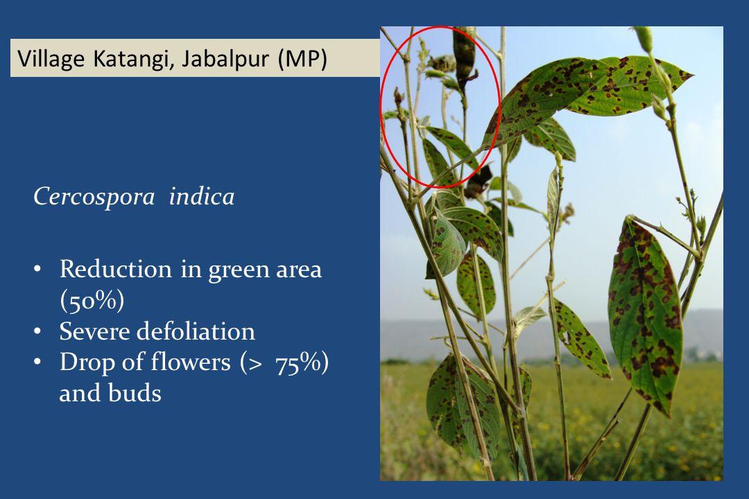 Village Katangi, Jabalpur (MP) Cercospora indica Reduction in green area (50%) Severe defoliation Drop of flowers (> 75%) and buds