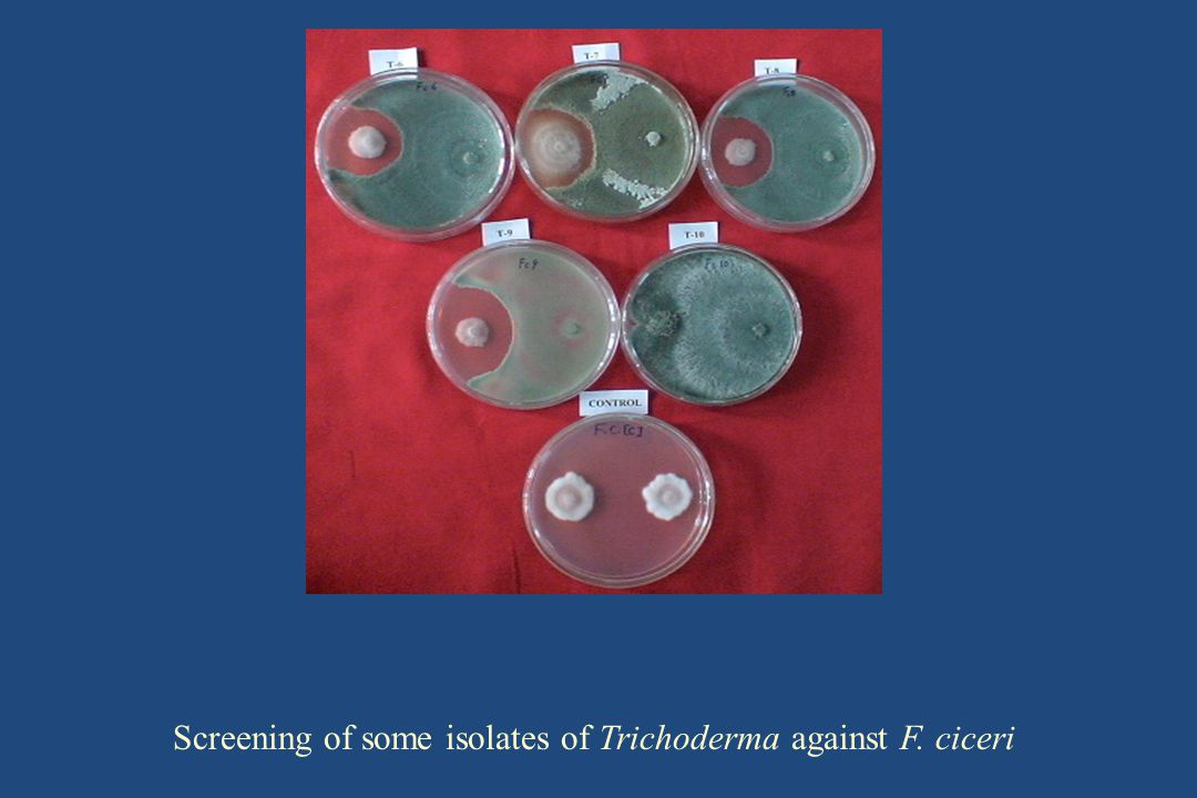 Screening of some isolates of Trichoderma against F. ciceri