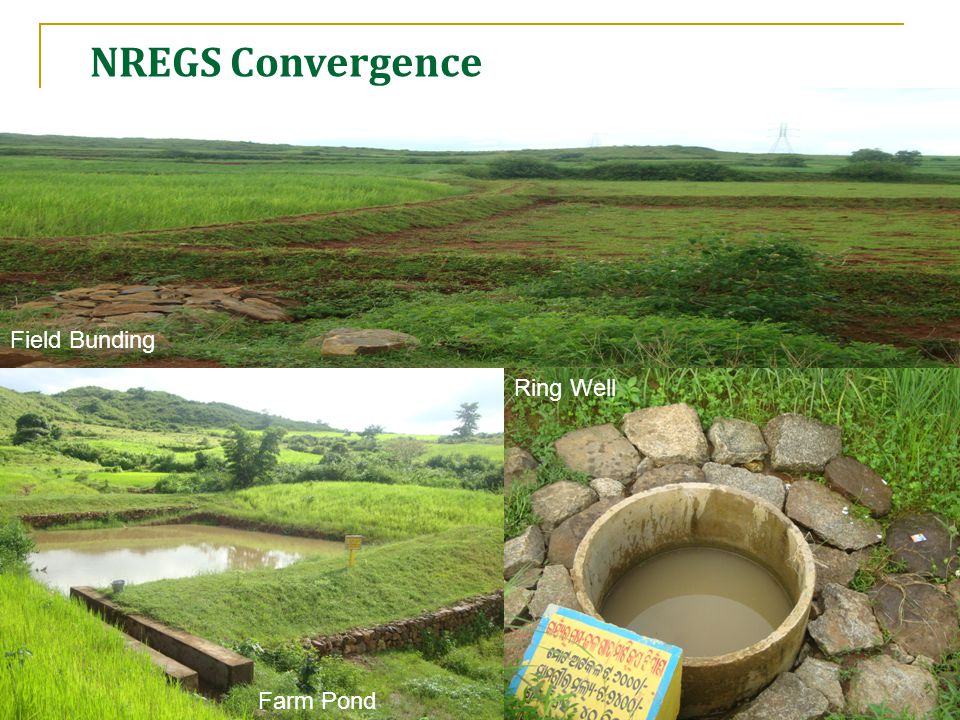 NREGS activities in Koraput district Field Bunding Farm Pond Ring Well NREGS Convergence