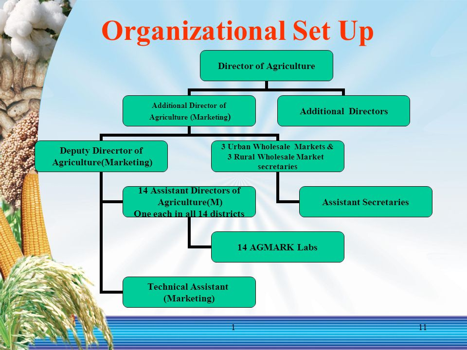 111 Organizational Set Up Director of Agriculture Additional Director of Agriculture (Marketing) Deputy Direcrtor of Agriculture(Marketing) 14 Assista