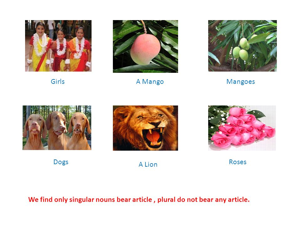 GirlsA MangoMangoes Dogs A Lion Roses We find only singular nouns bear article, plural do not bear any article.