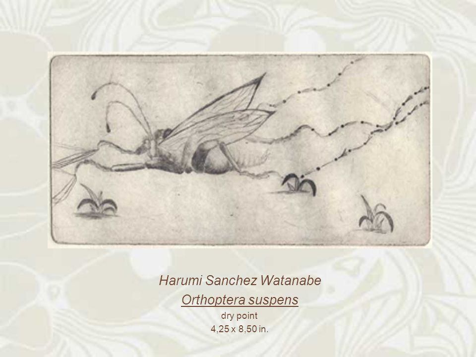 Harumi Sanchez Watanabe Orthoptera suspens dry point 4,25 x 8,50 in.