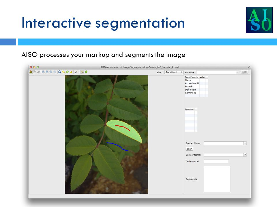 Interactive segmentation AISO processes your markup and segments the image