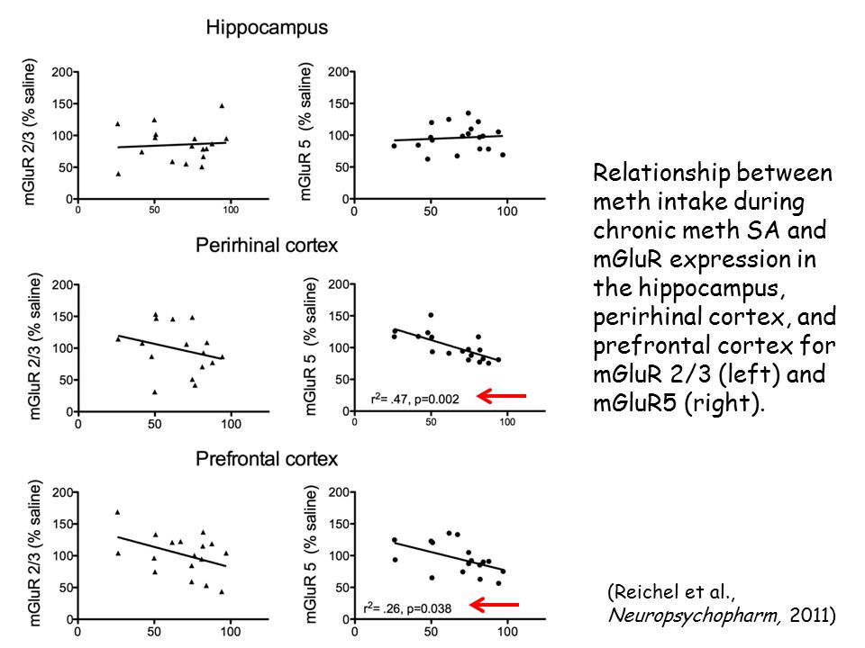 Relationship between meth intake during chronic meth SA and mGluR expression in the hippocampus, perirhinal cortex, and prefrontal cortex for mGluR 2/3 (left) and mGluR5 (right).