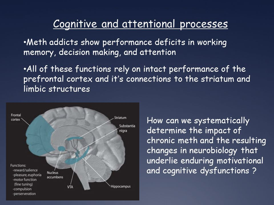 Cognitive and attentional processes Meth addicts show performance deficits in working memory, decision making, and attention All of these functions rely on intact performance of the prefrontal cortex and it's connections to the striatum and limbic structures How can we systematically determine the impact of chronic meth and the resulting changes in neurobiology that underlie enduring motivational and cognitive dysfunctions ?