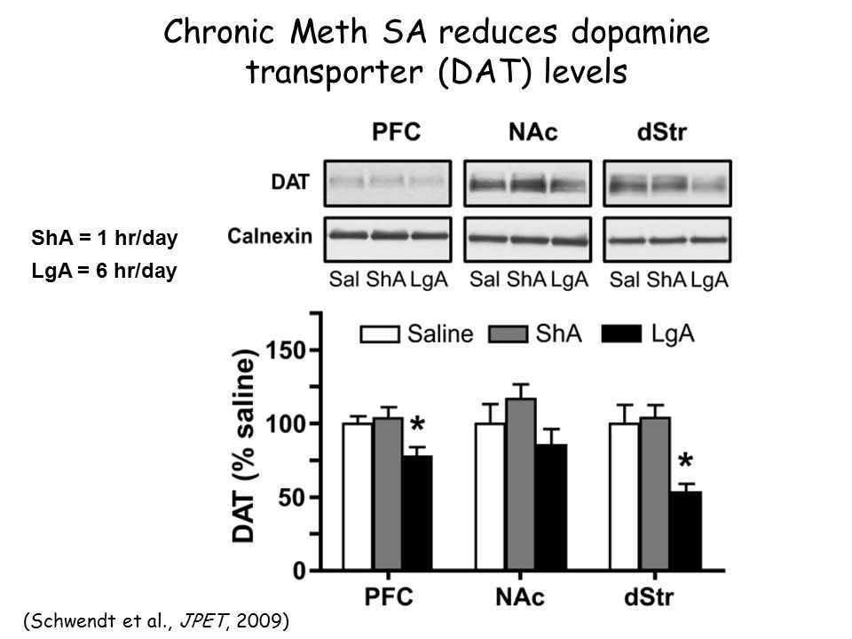 (Schwendt et al., JPET, 2009) ShA = 1 hr/day LgA = 6 hr/day Chronic Meth SA reduces dopamine transporter (DAT) levels