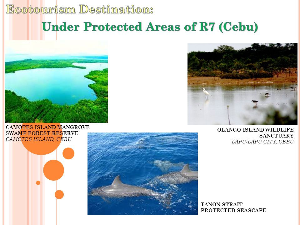 CAMOTES ISLAND MANGROVE SWAMP FOREST RESERVE CAMOTES ISLAND, CEBU TANON STRAIT PROTECTED SEASCAPE OLANGO ISLAND WILDLIFE SANCTUARY LAPU-LAPU CITY, CEB