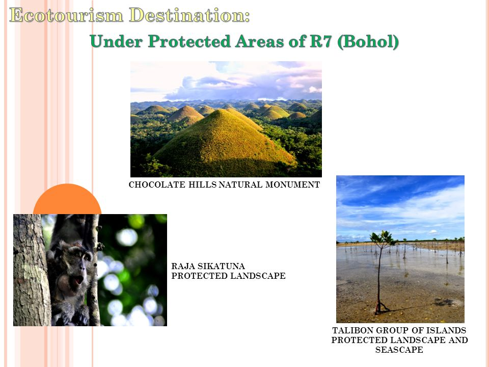 ALBURQUEEQUE-LOAY-LOBOC PROTECTED LANDSCAPE AND SEASCAPE PANGLAO ISLAND PROTECTED SEASCAPE CABILAO-SANDINGAN ISLANDS MANGROVE SWAP FOREST RESERVE