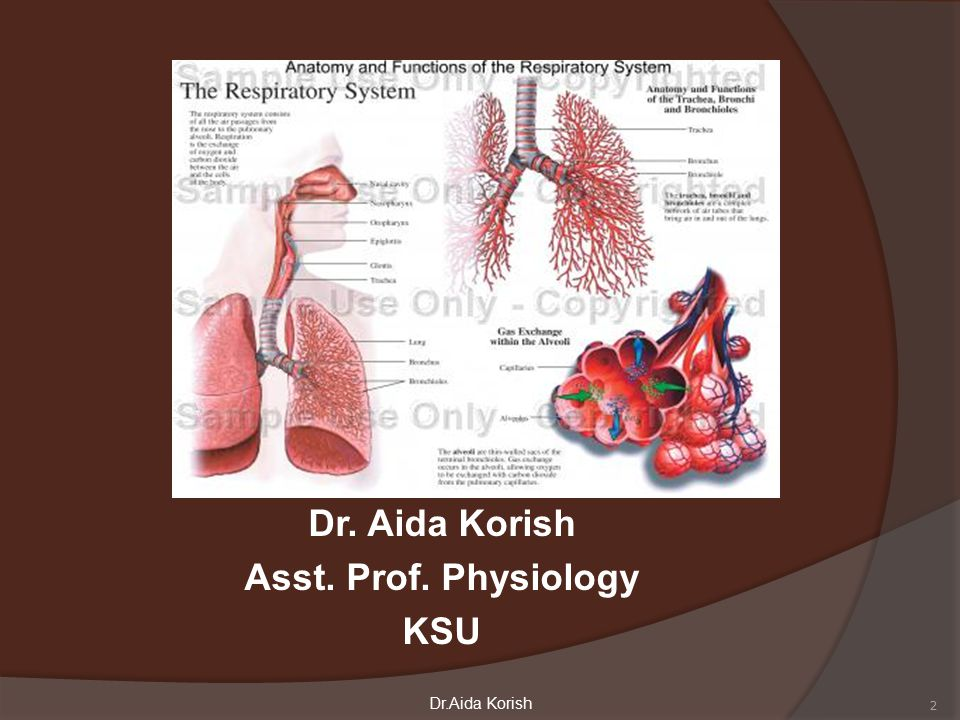 The Main goal of respiration is to 1-provide oxygen to tissues 2- remove CO2 3 Dr.Aida Korish