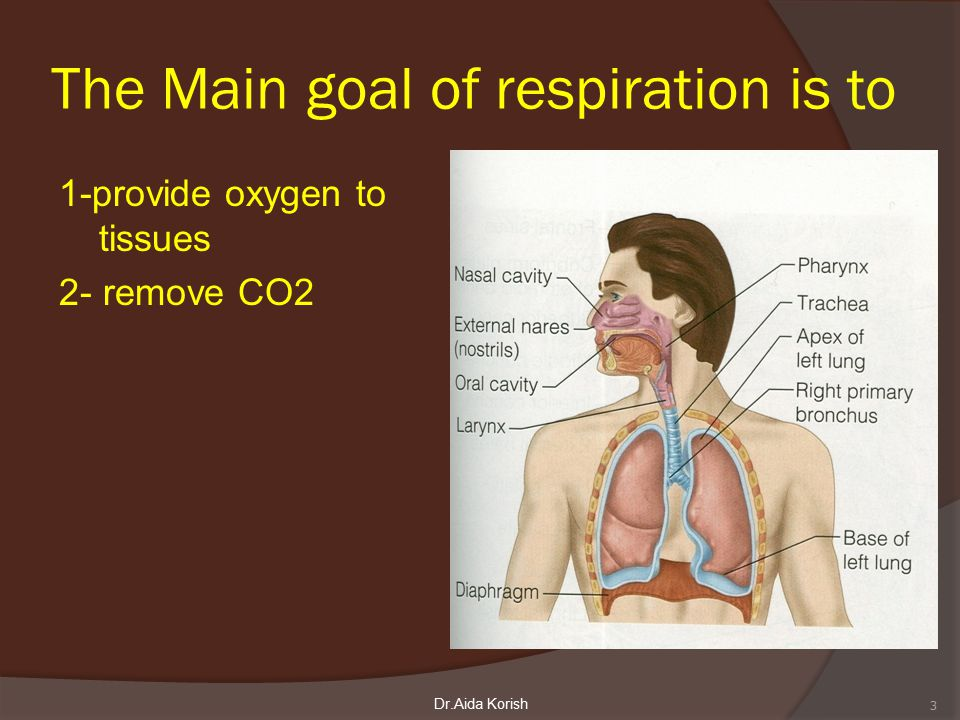 Volume change / pressure change ( Compliance of the lung) in a single respiratory cycle 34Dr.Aida Korish