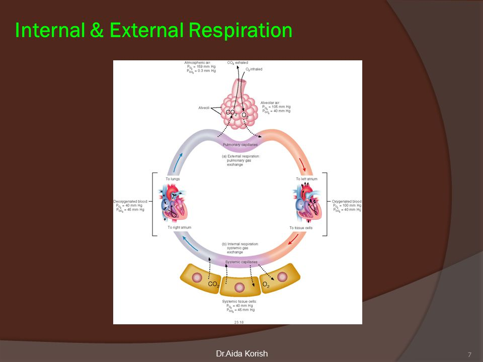 Pressure changes in the lungs during breathing  1-Intra-alveolar (intrapulmonary pressure  Between breathes = zero pressure  During inspiration = (-1 mmHg), air (tidal volume) flow from outside to inside the lungs).