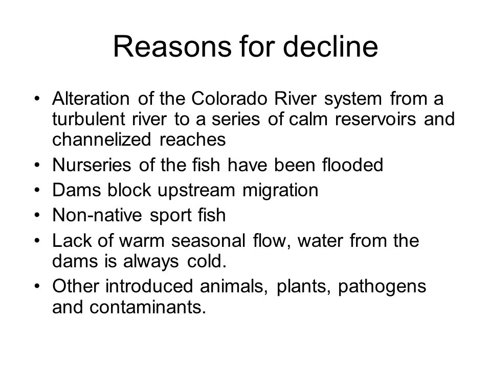 Reasons for decline Alteration of the Colorado River system from a turbulent river to a series of calm reservoirs and channelized reaches Nurseries of