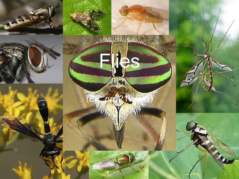 (EE, pp. 219-233) Flies