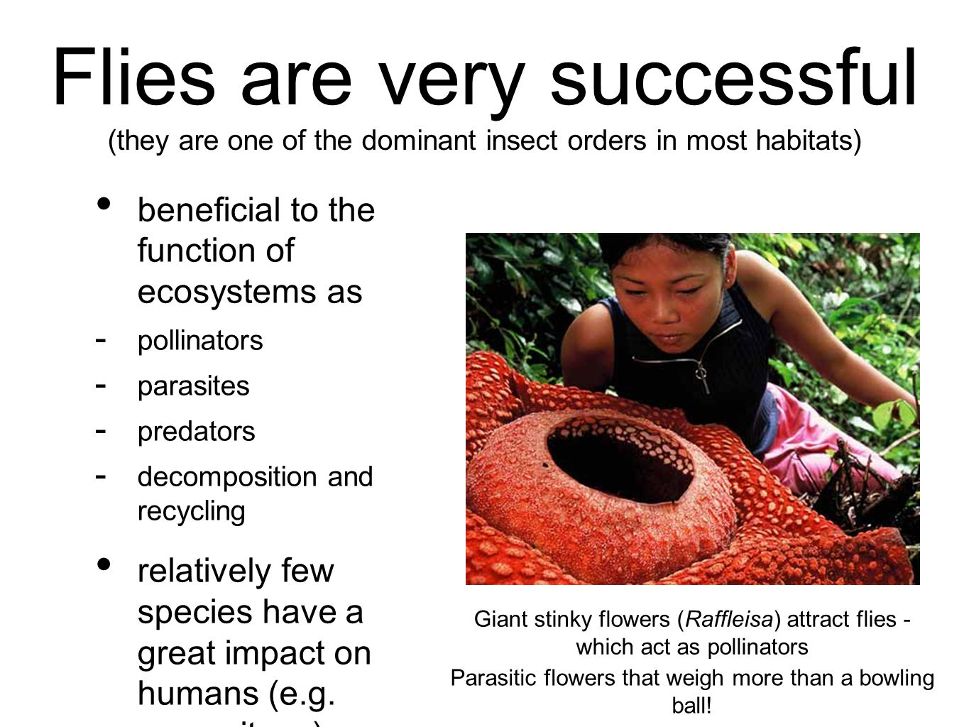 beneficial to the function of ecosystems as  pollinators  parasites  predators  decomposition and recycling relatively few species have a great impact on humans (e.g.