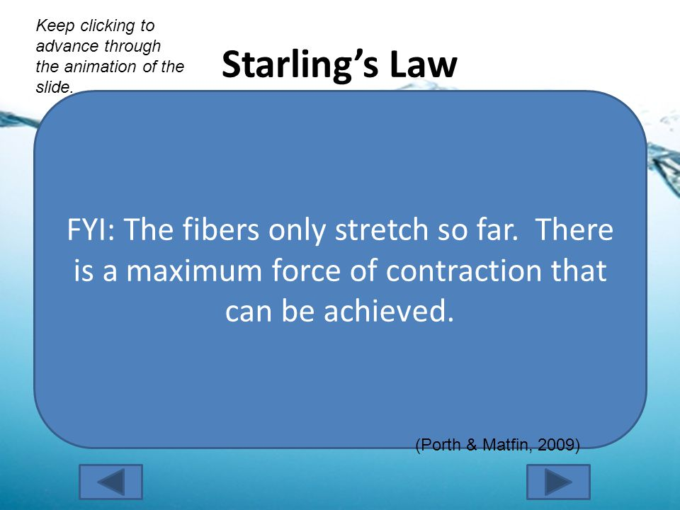Starling's Law End-Diastolic Volume The more blood in the heart at the end of diastole… Stretching of Cardiac Muscle The more the cardiac muscle fibers stretch… Force of Contraction The greater the force of the contraction.