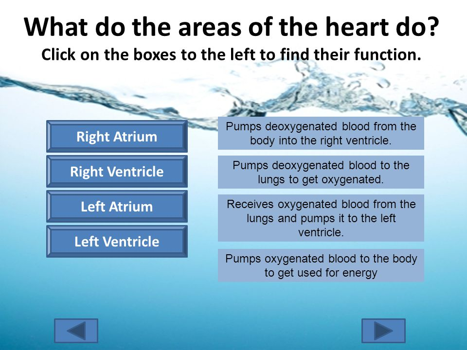 What do the areas of the heart do. Click on the boxes to the left to find their function.