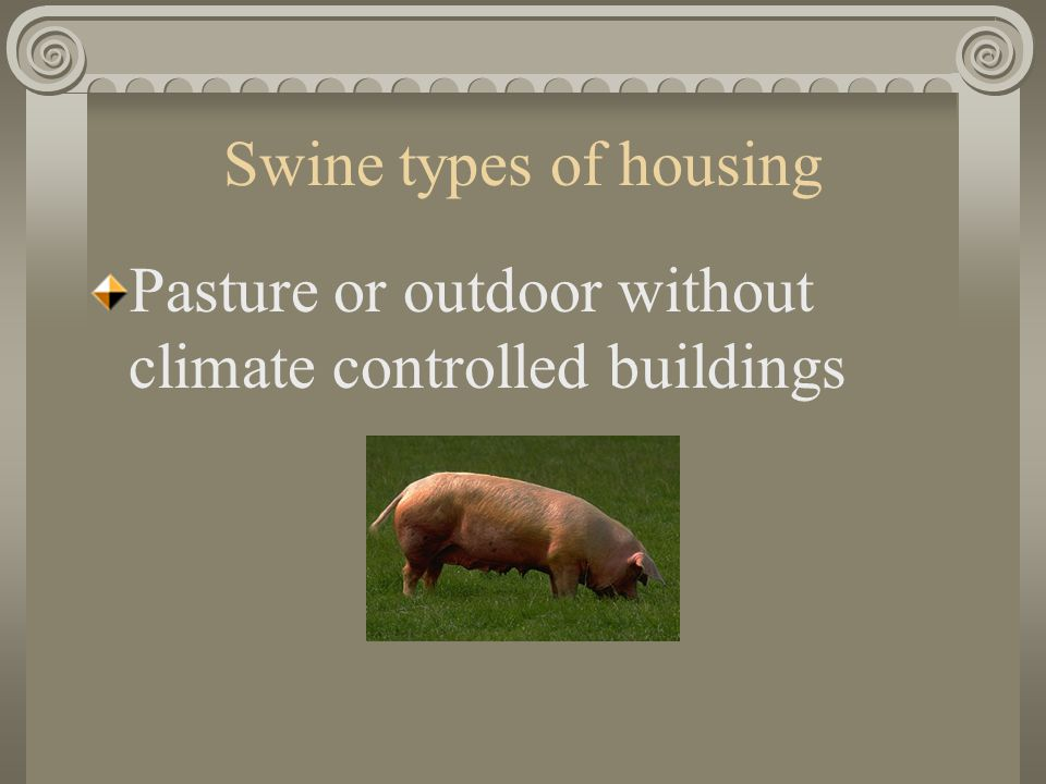 Swine types of housing Pasture or outdoor without climate controlled buildings