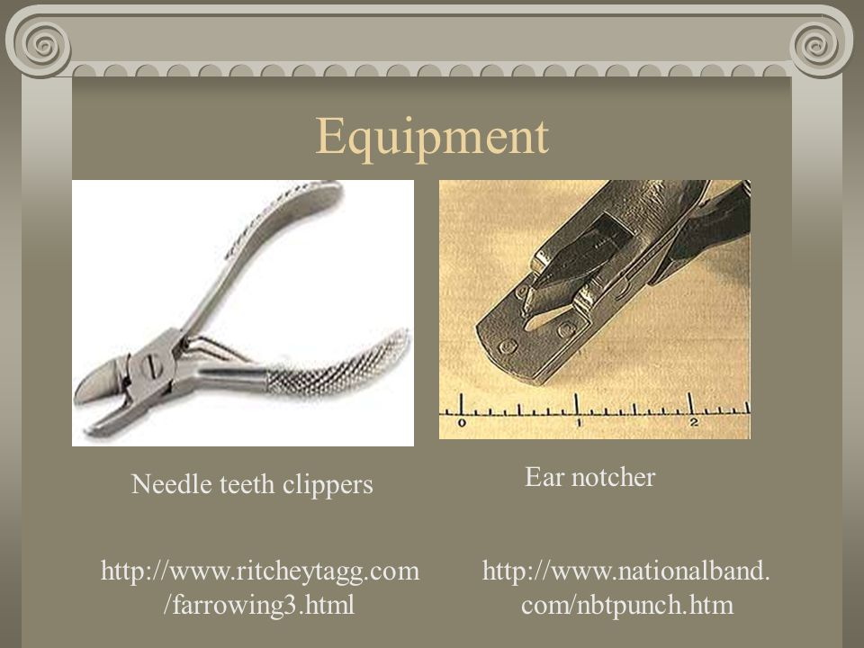 Equipment Needle teeth clippers http://www.ritcheytagg.com /farrowing3.html Ear notcher http://www.nationalband.