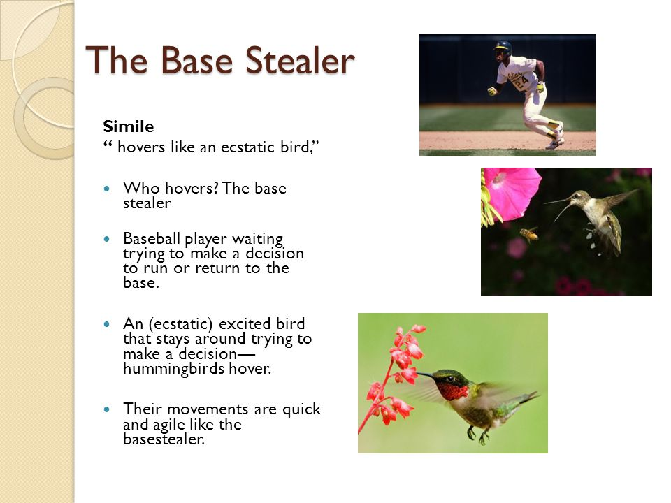 "The Base Stealer Simile "" hovers like an ecstatic bird,"" Who hovers? The base stealer Baseball player waiting trying to make a decision to run or retu"