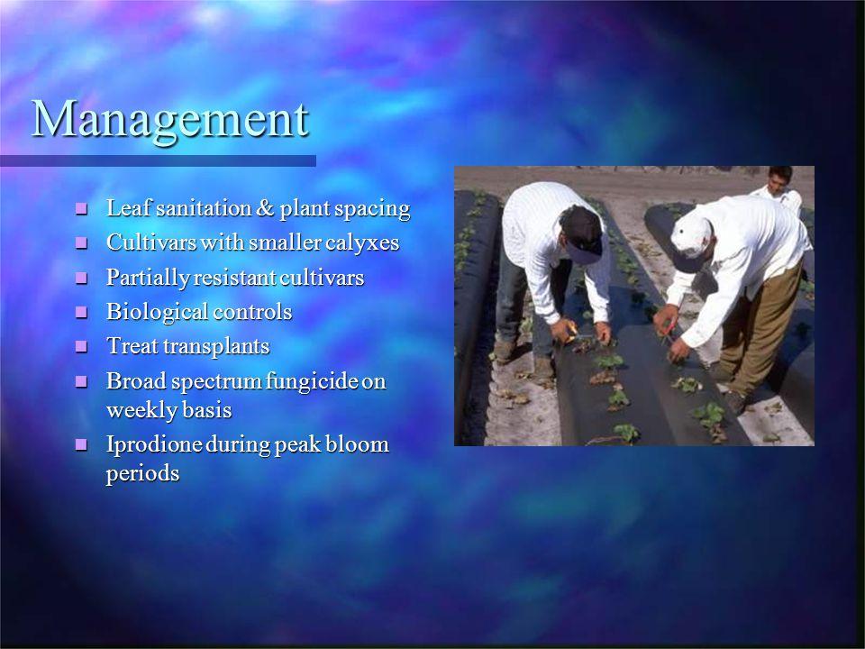 Management Leaf sanitation & plant spacing Leaf sanitation & plant spacing Cultivars with smaller calyxes Cultivars with smaller calyxes Partially res