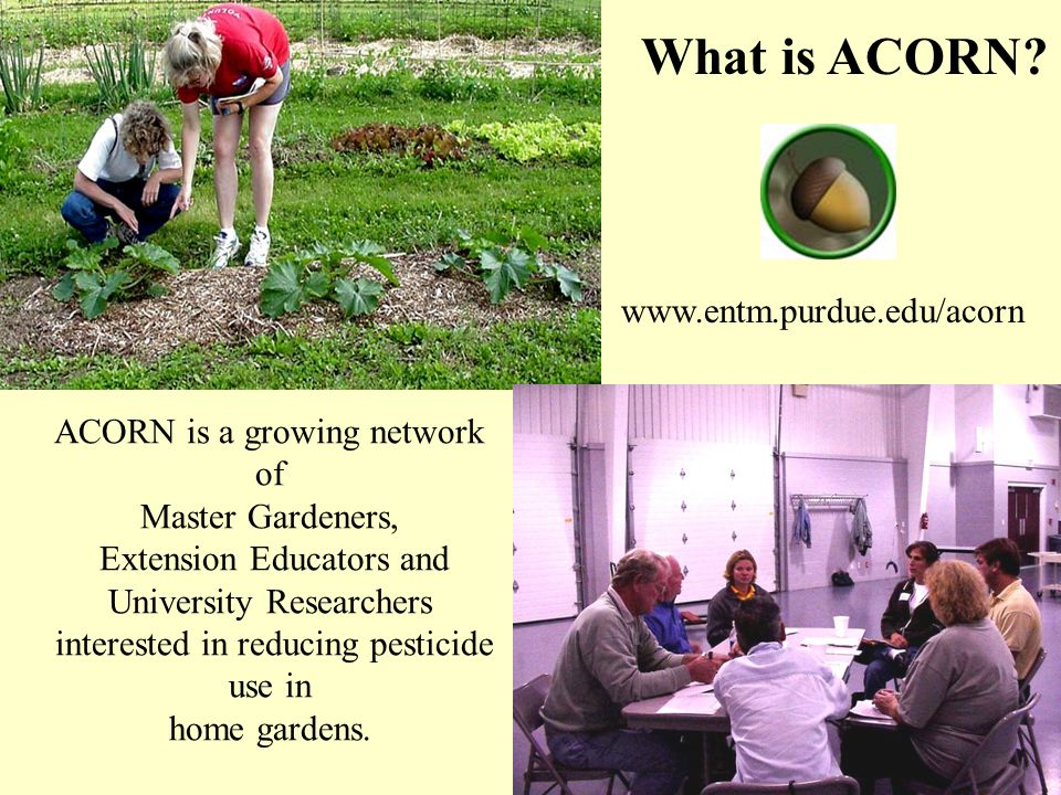 ACORN is a growing network of Master Gardeners, Extension Educators and University Researchers interested in reducing pesticide use in home gardens.