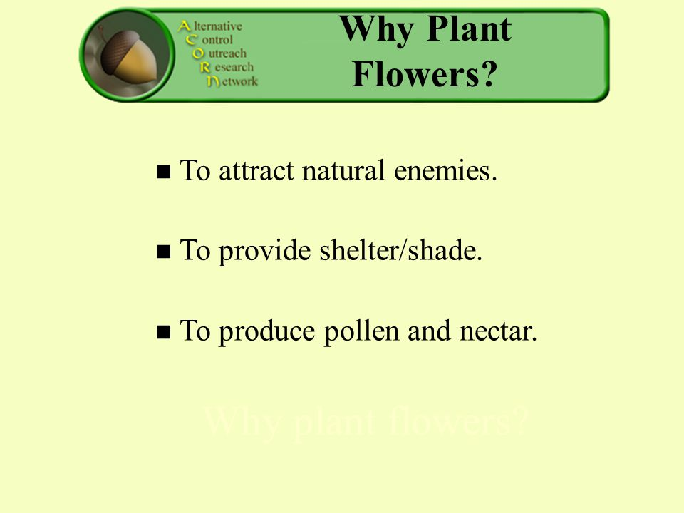 Why Plant Flowers. To attract natural enemies. To provide shelter/shade.