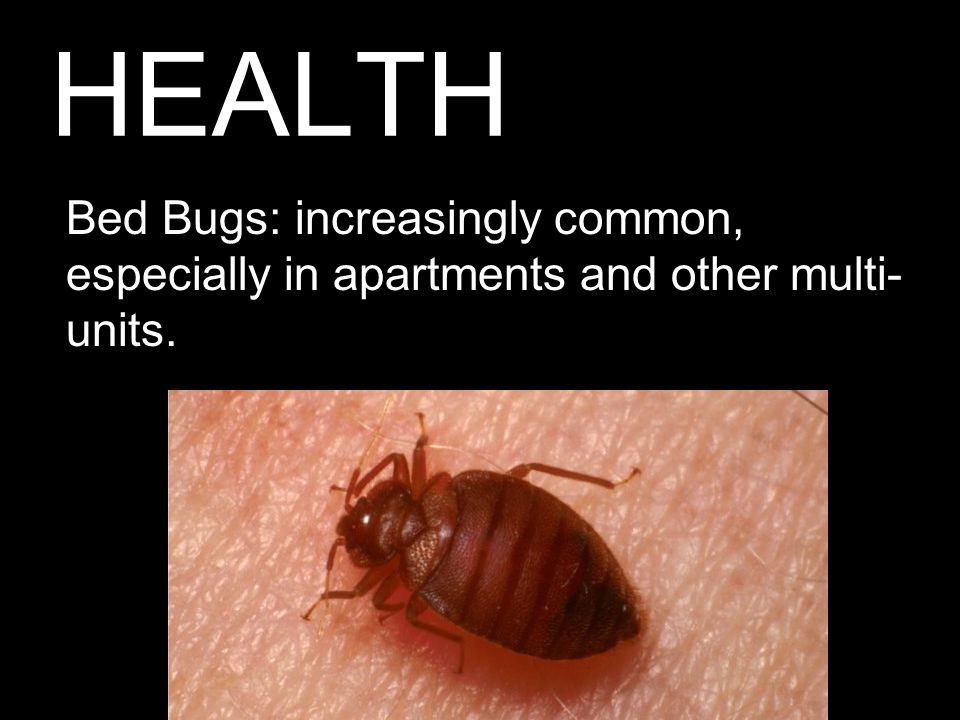 HEALTH Bed Bugs: increasingly common, especially in apartments and other multi- units.